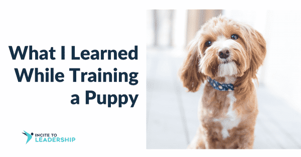 Jo Ilfeld |Executive Leadership Coach|Giving Feedback: What I learned from puppy training